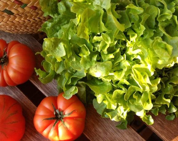 Lechuga y tomates raf